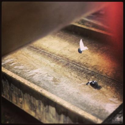 My run view 9/27/13 - Dove fly away in the rain - Austin, Texas © Sally Morrow Photography
