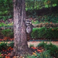 My run view 10/19/14 - meet Rocky. And no - this image is not fake. :) © Sally Morrow Photography